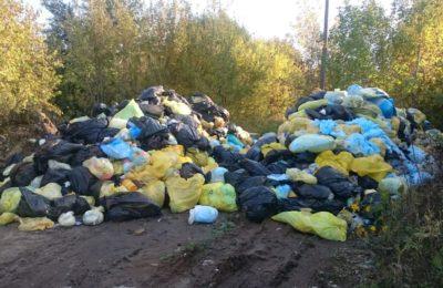 Незаконные свалки на территории Некрасовки и Люберец