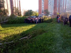 вырубка магнита некрасовка москва деревья жители сход